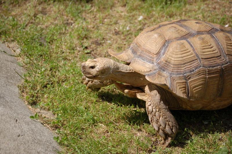 hare_turtle